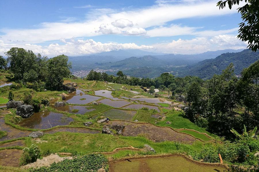 Route qui sillonne les rizières