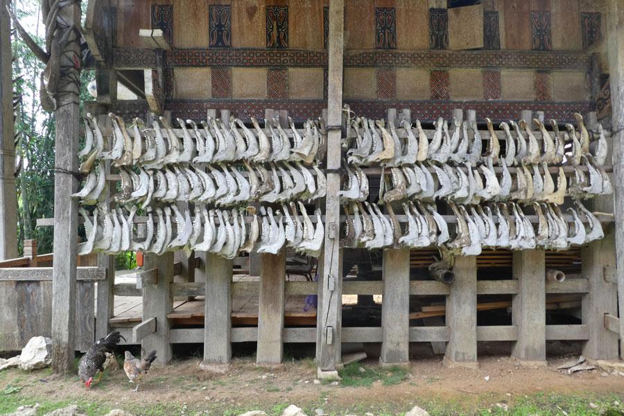 Os des buffles sacrifiés durant les cérémonies funéraires