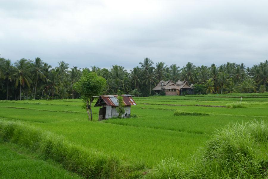 Les rizières cachées