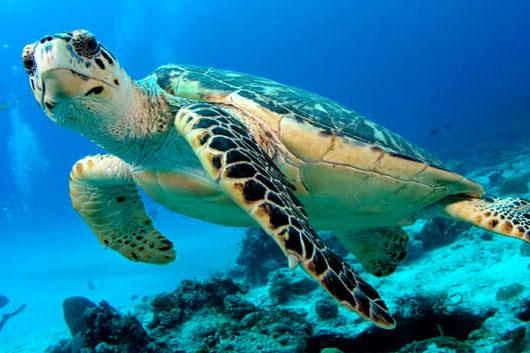 Les tortues :)