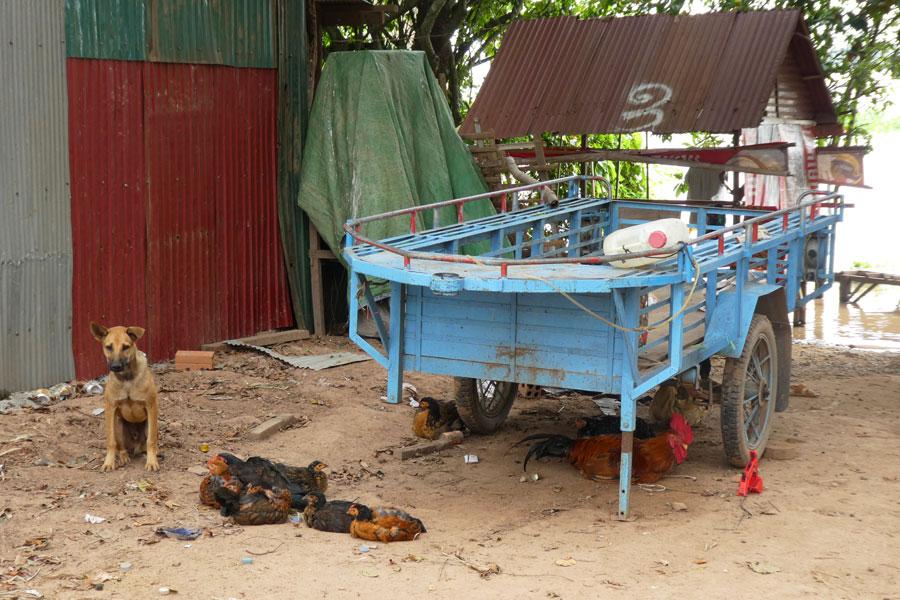 Un chien, des poules et un coq