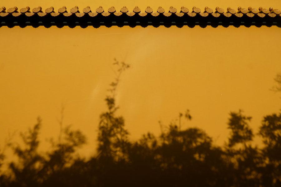 L'ombre des bambous au couché du soleil