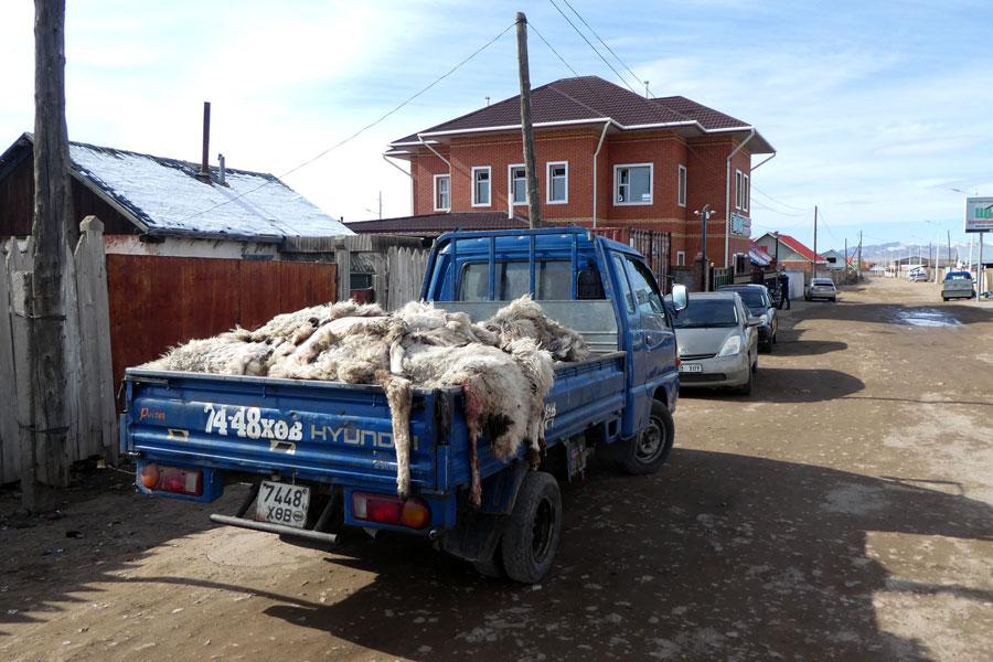 Des peaux de moutons